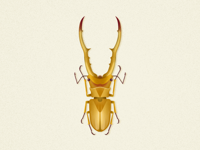 Stag Beetle illustration coleoptera vector biodiversity beetle bug insect