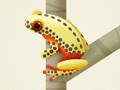 Clown Tree Frog frogs wild animal clown treefrog vector amphibian frog illustration biodiversity