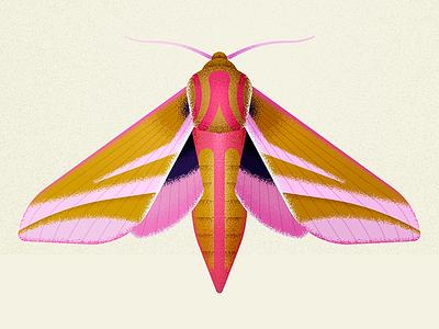 elephant hawk moth nature design moths vector insect bug moth biodiversity illustration