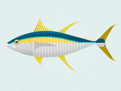 Tuna illustration sea ocean biodiversity yellowfin fish tuna vector