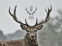 Deer North - Logo Design