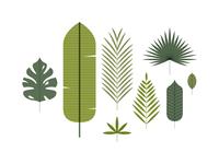 Specimen | Leaf 01