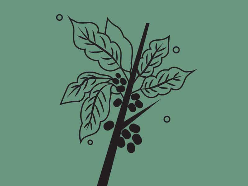Coffee Plant circle leaf indonesia minimal vector green black editorial flora plant coffee