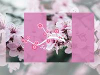 Sakura Flowers 🌸