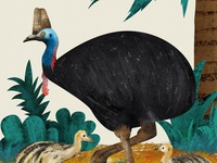 "A cassowary illustration from ""All about the egg"" book"