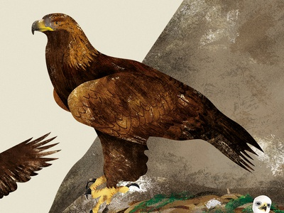 """Golden Eagle - illustration from """"All about the Egg"""""""