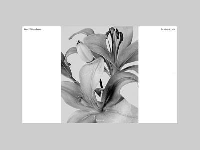 David William Baum, Flores flowers flower portfolio design typography