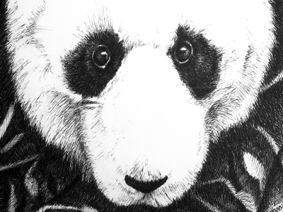 Panda Portrait pen and ink