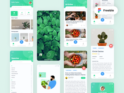 Plant App | UI Design & Illustration Freebie ui design illustration clean iphone x app freebies freebie uxui uiux ui
