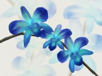 Blue Orchids Speedpaint
