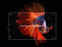 Fish Gallery UI Design