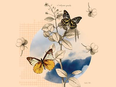 Vintage Desktop vintage collage butterflies illustration