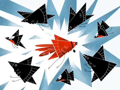 Birds color coin procreate animal art bullfinch raven crow parrot digital flat raster birds illustration