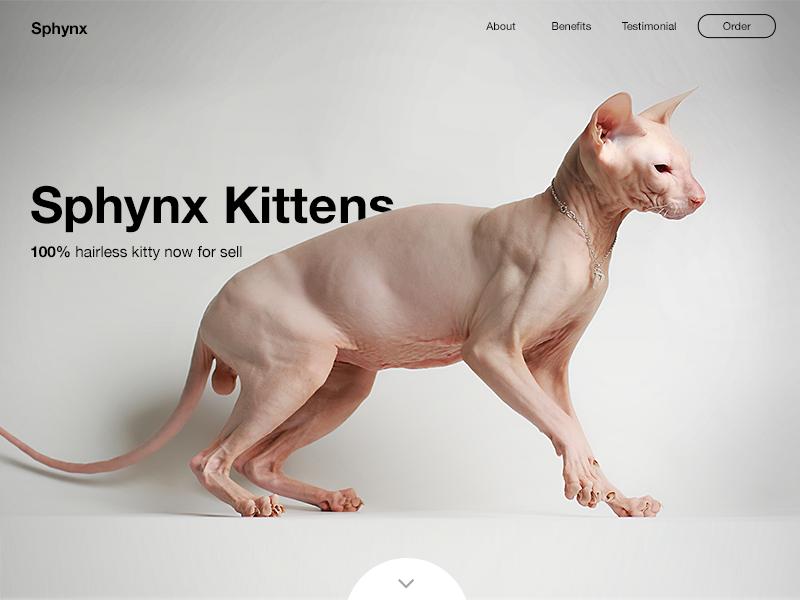 Sphynx by Keren Hossy on Dribbble