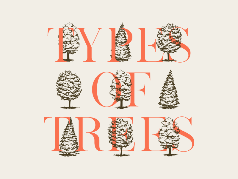 Type Of Trees forest orange modernserif handdrawn pen and ink trees