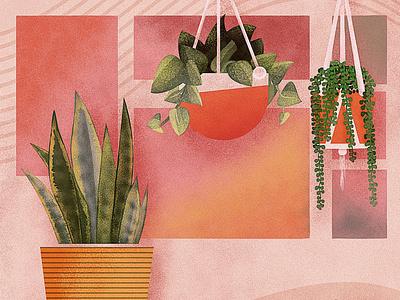House Plants procreate snake plant sting of pearls hanging plants garden plants house house plants