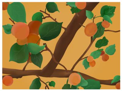 Love Apricots?