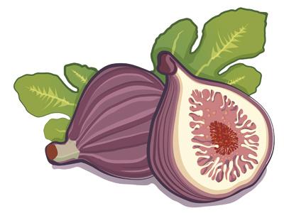 illustration illustration fruit digital illustration paint