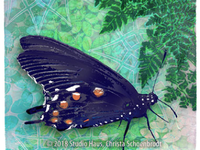 Red Spotted Purple Butterfly with Ferm
