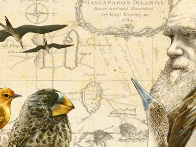 On the Origin of Species layoutdesign graphic design