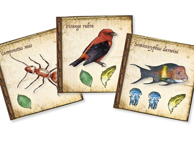 Tile design for the On the Origin of Species game