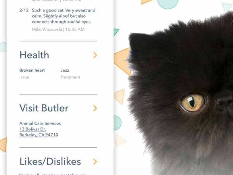Butler health fluffy kitty animal profile pet cat