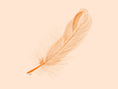 Feather illustration apple pencil procreate sketch orange feather