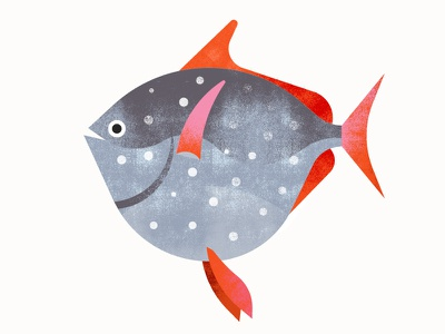 Californian Sea Creatures | Opah texture opah animals fish illustration