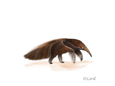Anteater animal lover animal illustration procreate anteater