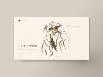 Green finch web design book bird illustration unsplash bird