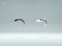 190530_鱼&fish