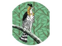 Eagle In Jungle