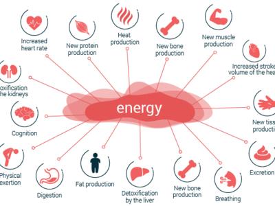 Energy Expenditure web vector artwork vector art vector illustration design adobe illustrator cc adobe