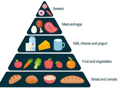 Food pyramid food art web vector artwork vector art vector illustration design adobe illustrator cc adobe food and drink food pyramid