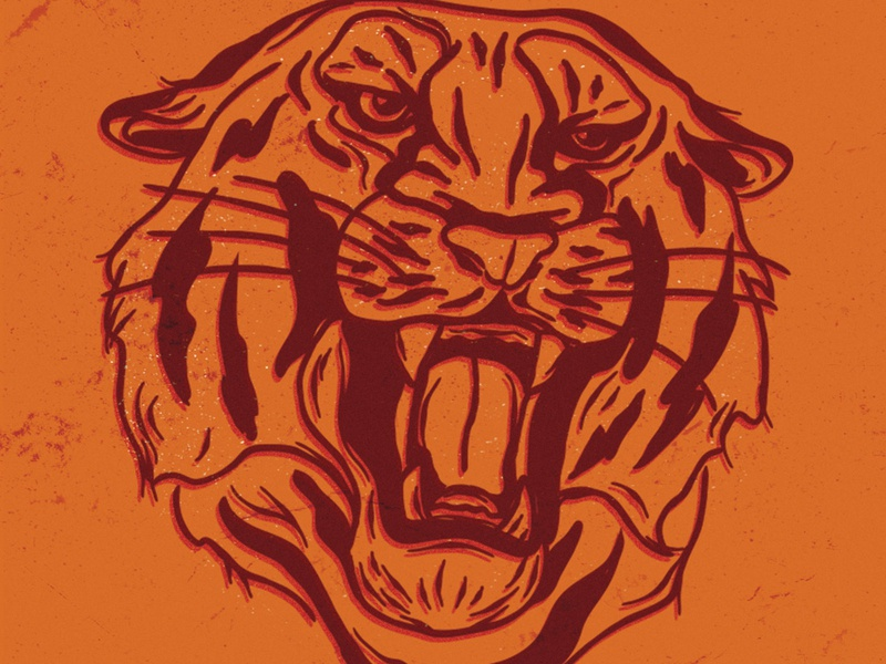 Tiger Illustration sketch offest orange velvet poster tiger vector design illustration