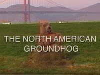 Belated Groundhog Day!