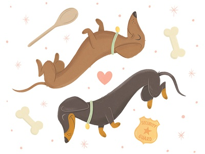 Two Dachshunds