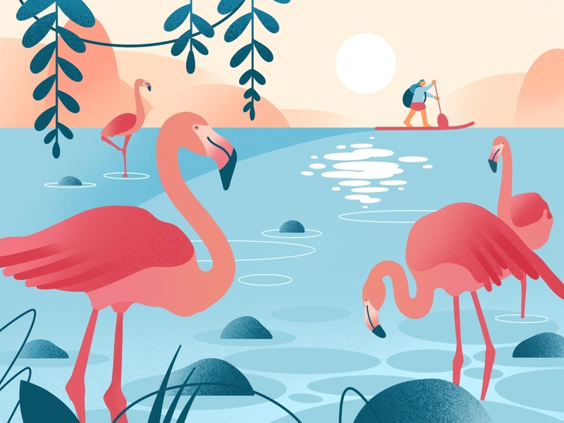 Calmness bay bay sail calm bird flamingo sunset river trip travel girl ipadpro procreate warmup character design character web app illustration flat minimal