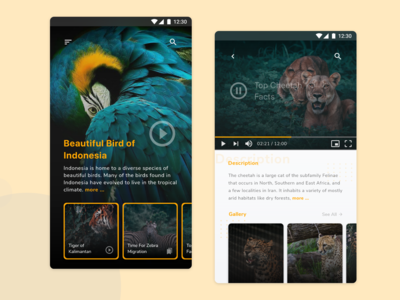 National Geographic Mobile UI