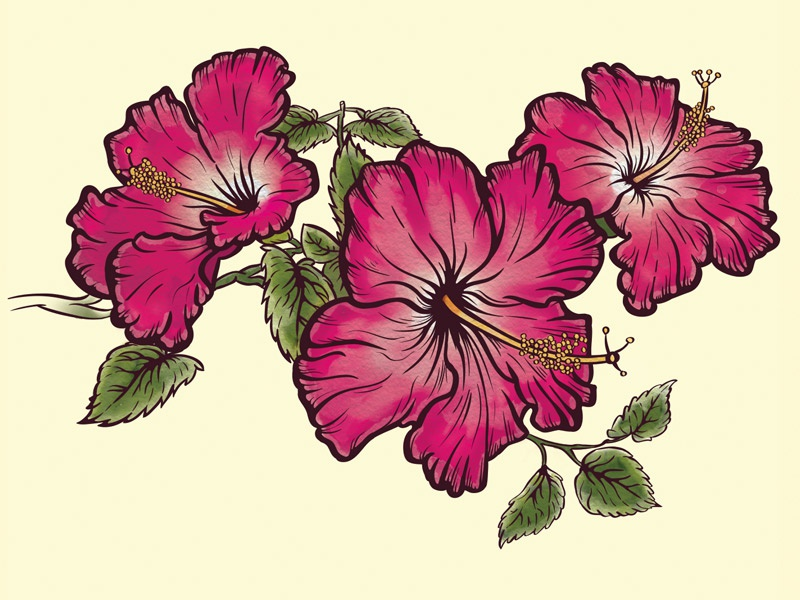 Hibiscus Flower Drawing By Alex Bogh Dribbble Dribbble