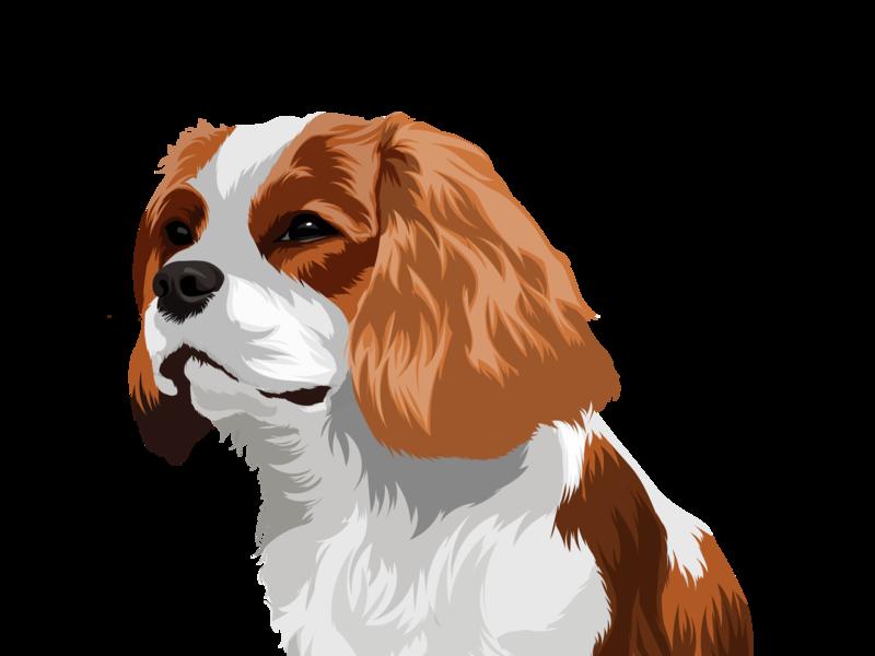Pet drawing drawing pets dogs vector cartoon design cartoon character dog illustration illustration portrait