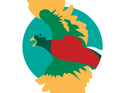 Quetzal Bird illustrator vector bird bright wacom cintiq