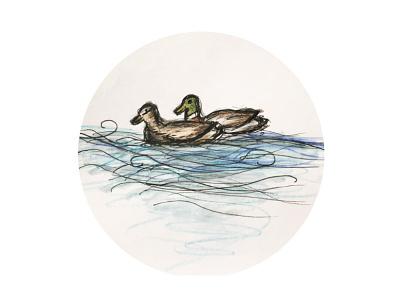 Drawing of ducks drawing sketch wavelet line water brush aquarell liner drake ducks duck