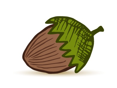Hazelnut leaf vector drawing nut hazelnut