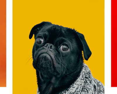 Pets Adoption App minimal clean animal charity app donate donation cat pet dog adopt