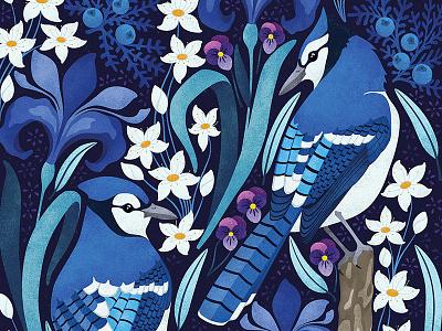 Canadian Blue Jays colour pattern jay blue quebec montreal design nature birds illustration