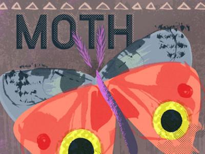 Moth texture bright pop design illustration moth nature