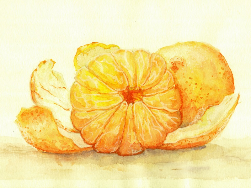 Tangerines print food art fine art food watercolor sketch illustration