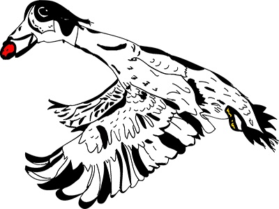 Pato illustration vector