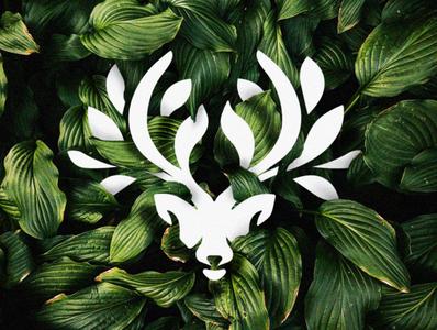 deerleaf leaf logo nature logo nature leaf flat minimal deer illustration deer head deer logo deer branding animal design animal illustration logo design logomark design brand logo graphic  design